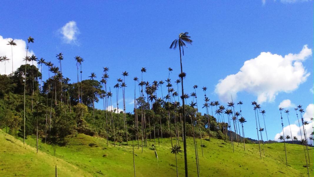 Dolina Cocory