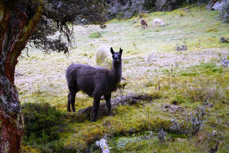 Cuenca i Park Caje