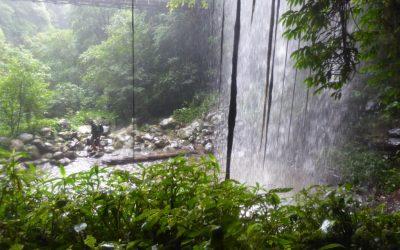 Rainforest Dorrigo